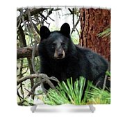 Black Bear 1 Shower Curtain