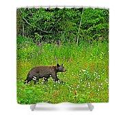 Black Bear Along Yellowhead Highway-bc Shower Curtain