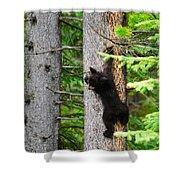 Black Bear Cub Climbing A Pine Tree Shower Curtain