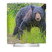 Black Bear Cub Near Road In Grand Teton National Park-wyoming Shower Curtain