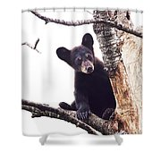 Black Bear Cub Up In A Dead Tree In Northern Minnesota Shower Curtain