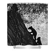 Black Bear Cubs Climbing A Tree Shower Curtain