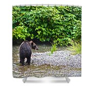 Black Bear Eating A Salmon In Fish Creek In Tongass National Forest-ak Shower Curtain