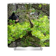 Black Bear Family In A Tree Shower Curtain