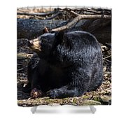Black Bear Guarding Food Shower Curtain