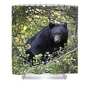 Black Bear II Shower Curtain