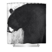 Black Bear Profile Shower Curtain