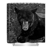 Black Bear - Scruffy - Black And White Cropped Portrait Shower Curtain