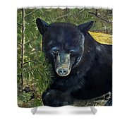 Bear Painting - Scruffy - Profile Cropped Shower Curtain