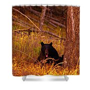 Black Bear Sticking Out Her Tongue  Shower Curtain