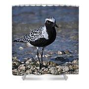 Black-bellied Plover No.2 Shower Curtain