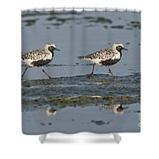 Black-bellied Plovers Shower Curtain