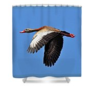 Black-bellied Whistling-duck In Flight  Shower Curtain