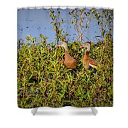 Black-bellied Whistling Ducks Shower Curtain