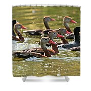 Black-bellied Whistling Ducks Shower Curtain