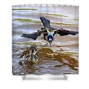 Black Bird On The Water Shower Curtain