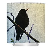 Black Bird Perch Shower Curtain