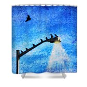 Black Birds Shower Curtain