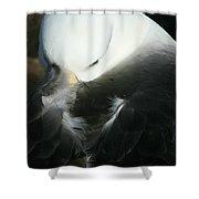 Black Browed Albatross Shower Curtain