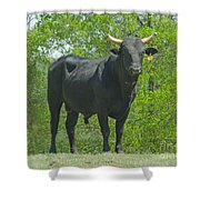 Black Bull Shower Curtain