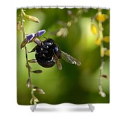 Black Bumblebee Shower Curtain