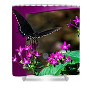 Black Butterfly 06 Shower Curtain