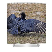 Black Buzzard Back Shower Curtain