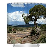 Black Canyon Juniper Shower Curtain