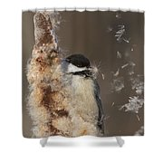 Black-capped Chickadee In Winter Shower Curtain by Mircea Costina Photography