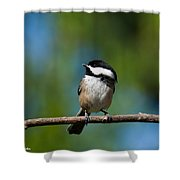Black Capped Chickadee Perched On A Branch Shower Curtain