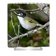 Black-capped Vireo Shower Curtain