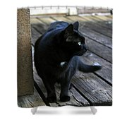 Black Cat On Porch Shower Curtain