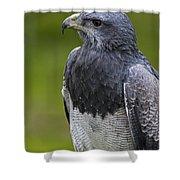 Black-chested Buzzard-eagle Shower Curtain