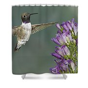 Black Chinned Hummingbird 2 Shower Curtain