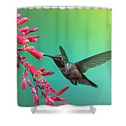 Black Chinned Hummingbird Shower Curtain