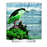 Black Crowned Green Night Heron Shower Curtain