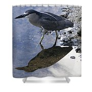 Black Crowned Night Heron And Shadow Shower Curtain
