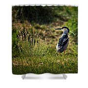 Black-crowned Night Heron At Carson Lake Wetlands Shower Curtain