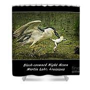 Black-crowned Night Heron At Martin Lake Shower Curtain