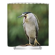 Black-crowned Night Heron Calling Shower Curtain