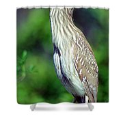 Black-crowned Night Heron Juvenile Shower Curtain