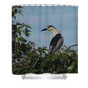 Black-crowned Night Heron Shower Curtain
