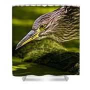 Black Crowned Night Heron Pictures 115 Shower Curtain