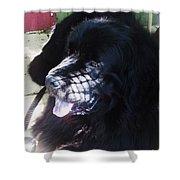 Black Dog Shower Curtain