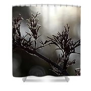 Black Edlerberry Bush Shower Curtain