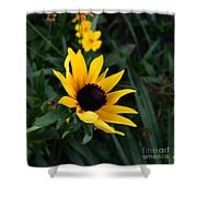 Black-eyed Susan Glows With Cheer Shower Curtain