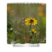Black-eyed Susan Shower Curtain