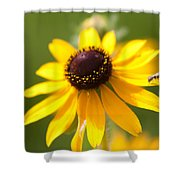 Black-eyed Susan With Friend Shower Curtain