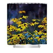 Black-eyed Susans Shower Curtain
