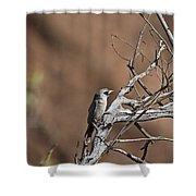 Black-faced Cuckoo Shrike Shower Curtain